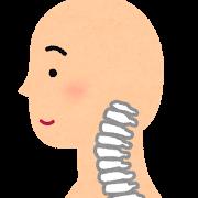 頸椎の正しい図